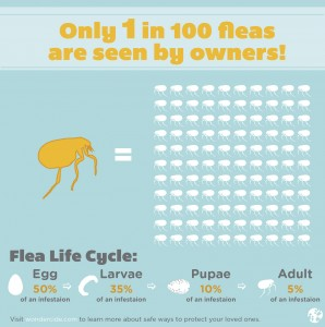 Natural flea protection