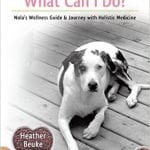 dog cancer health tips