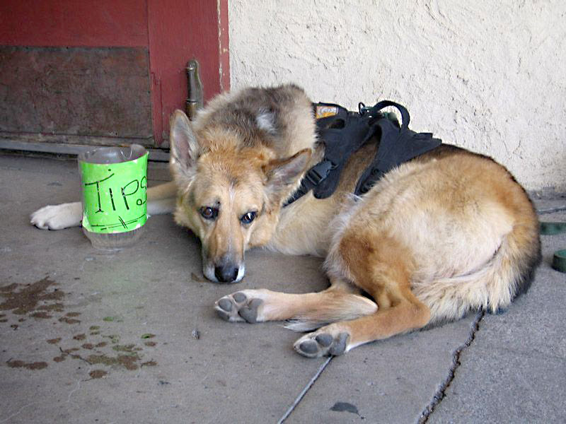 Tips for Tripawds!