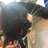 feliway pheromone therapy cats