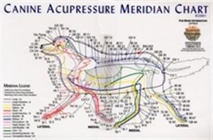 canine acupresure points
